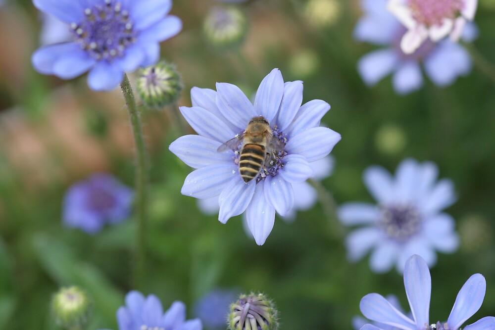 Bee samples nectar on blue flower by hiratadigital