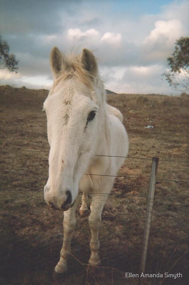 horse by Ellen Amanda Smyth