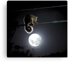 Possum & The Moon Canvas Print