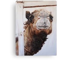 Betty and the Fence Canvas Print
