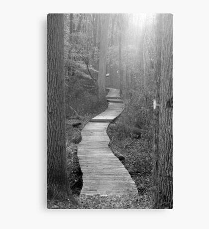 Wetland Trail B&W Canvas Print