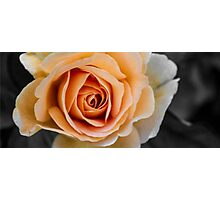 Peachy Photographic Print