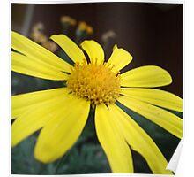 Petals of Gold Poster