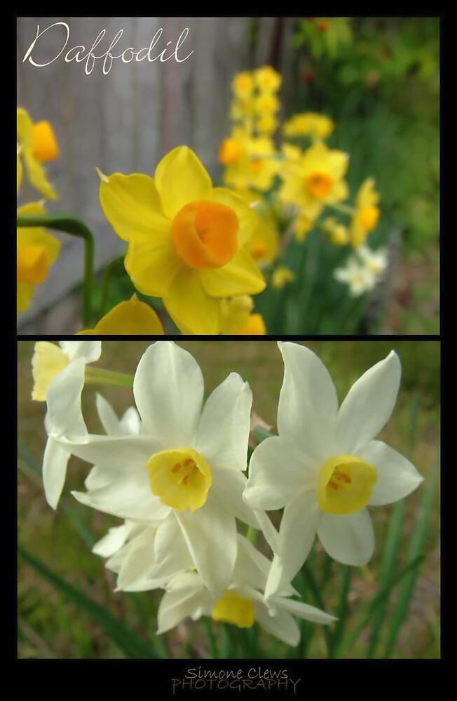 daffodil by Simone C