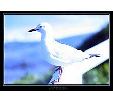 Seagull 2 Photographic Print