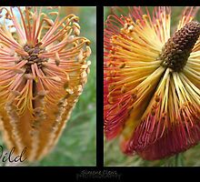 Wild Bush Banksia by Simone C
