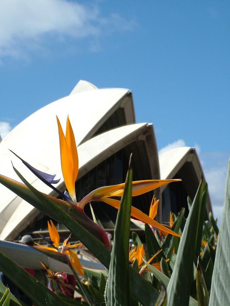 Sydney Opera House by Samuel Holt
