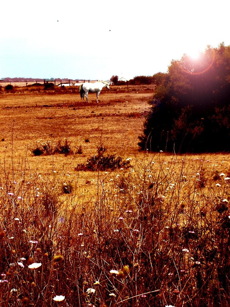 Dream field by Michelle Avery
