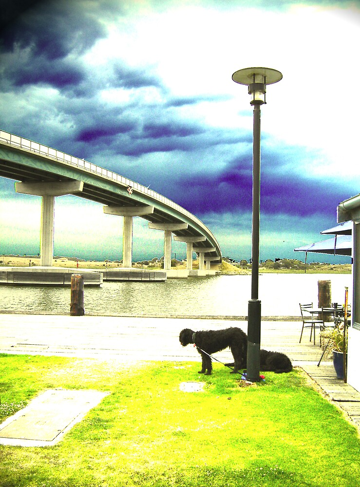 Poodle bridge by Michelle Avery