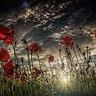 Fields of Glory...a day we should never forget... by EbyArts