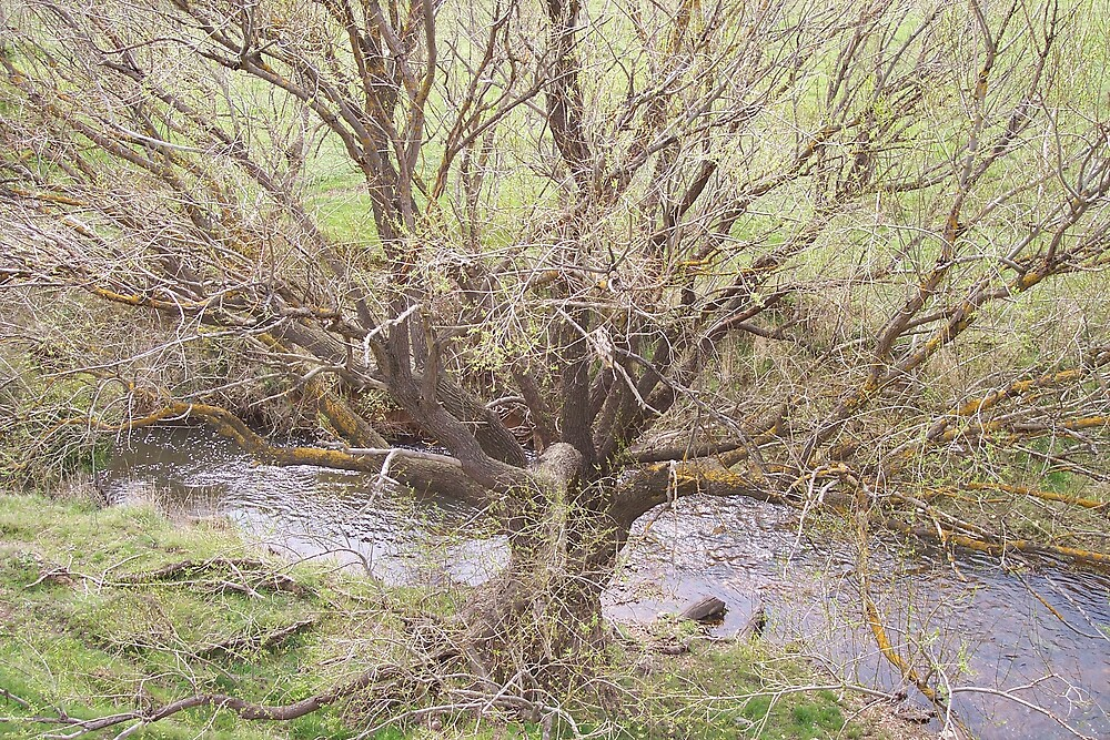 Winter Tree on The Loddon River by Denny