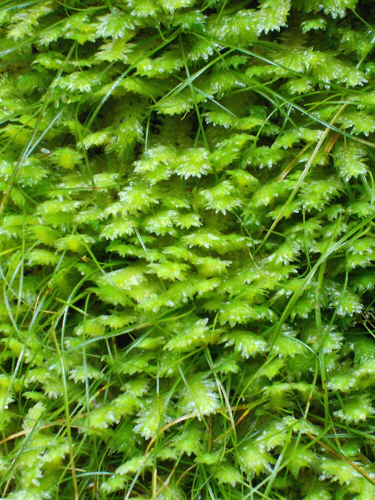 Green Wall by Treegirl