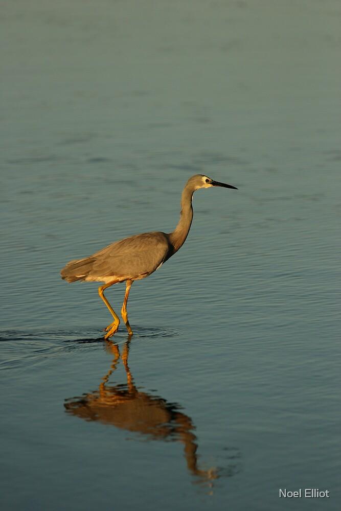 Wading Bird by Noel Elliot