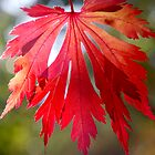 Crisp Red Autumn Leaf by Emma Newman