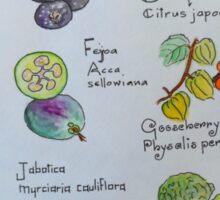 Fruits, A to L Sticker