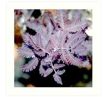 Purple Wattle Leaves Art Print