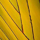 Diagonal by Heath Carney