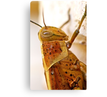 Cricket Close Up Canvas Print