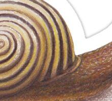 The Snail Sticker