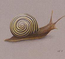 The Snail by Lars Furtwaengler