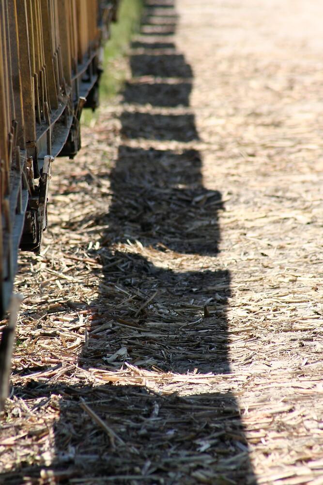 Cane Train Shadow by Dan Weston
