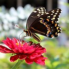 Butterfly On Red Flower by Cynthia48