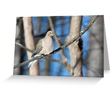 Mourning Dove in the Woods Greeting Card