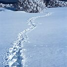 Footprints in Snow by John Barratt