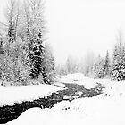 Fitzsimmons Creek, Whistler, BC, Canada. by Michael Tomkinson