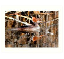 Female Hooded Merganser Art Print