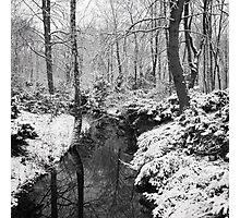 Winter in the Tiergarten, Berlin Photographic Print