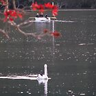 Autumn at Patonga by westray