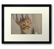 Tabby Kitten Digital Painting Framed Print
