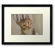 Tabby Kitten Digital Painting Framed Print