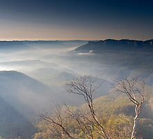 Morning Light by Andrew Bosman