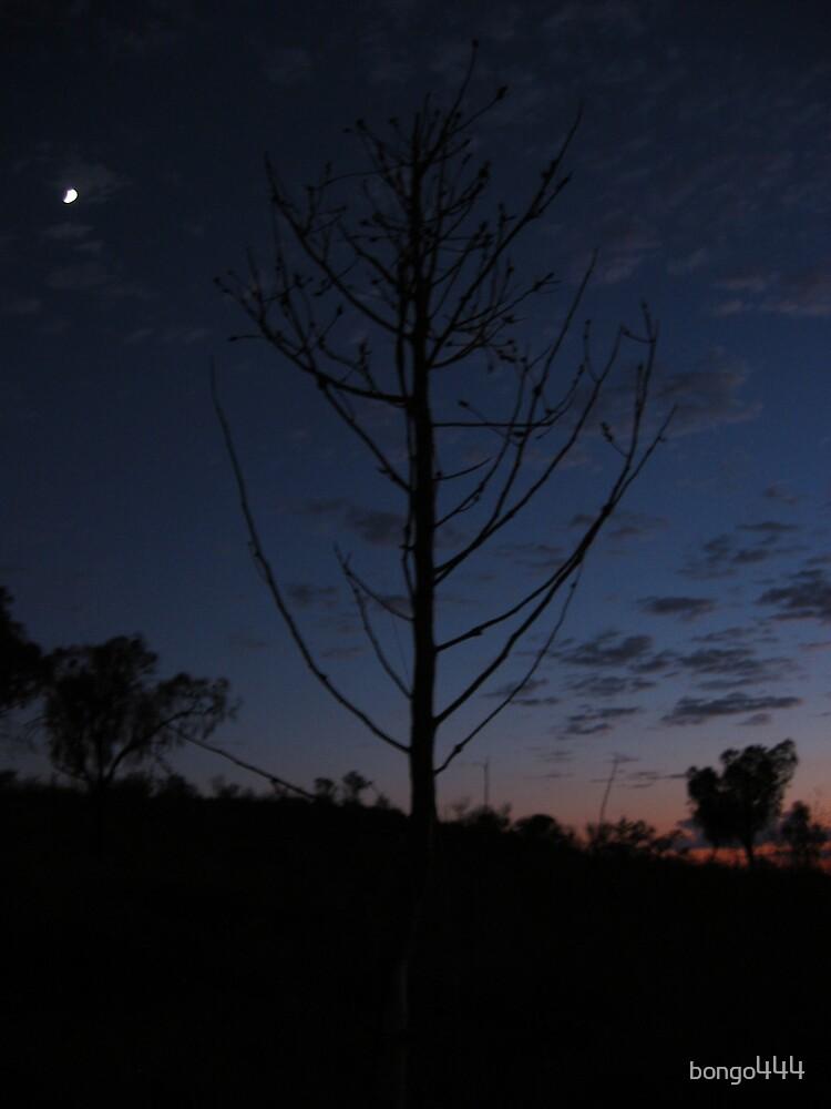 Tree - Sunrise @ Olgas by bongo444