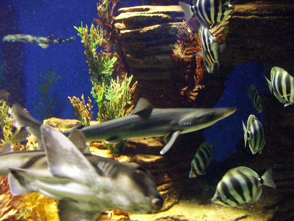 aquarium by simonsinclair