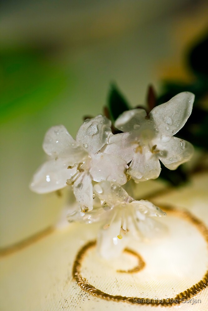 Dainty Blossom by Samantha Cole-Surjan