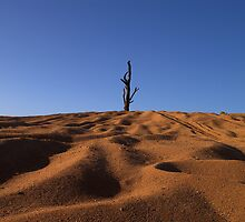 Desert Sand by Craig Myers