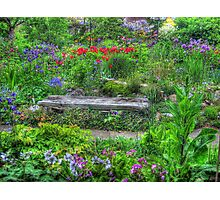 A Seat in Nature Photographic Print