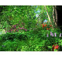 Magic Garden Photographic Print