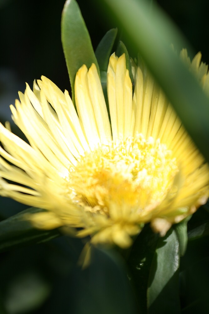 Yellow flower by bevan
