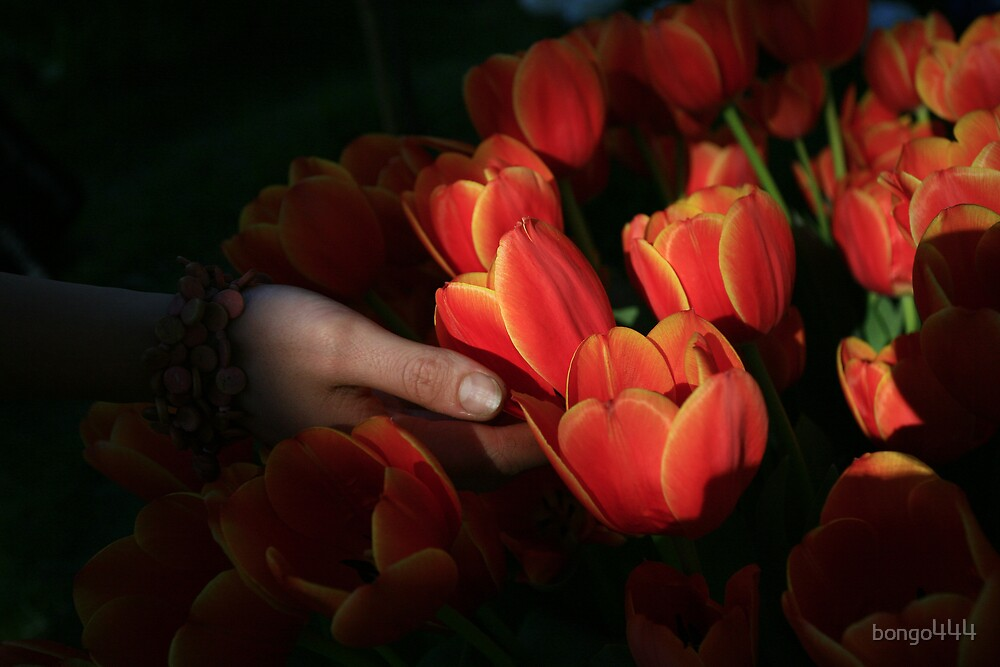 The Florist by bongo444
