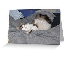 Keito, the Boneless cat Greeting Card