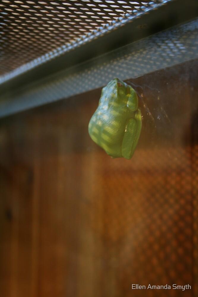 Green Tree Frog by Ellen Amanda Smyth