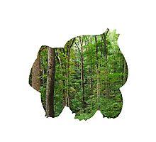 Bulbasaur used Growth Photographic Print