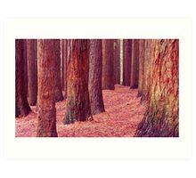 Californian Redwoods - Otway Ranges Art Print