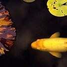 Yellow Koi Purple Lily Pad by Larry Costales