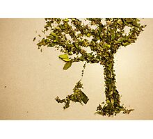 Herb tree Photographic Print