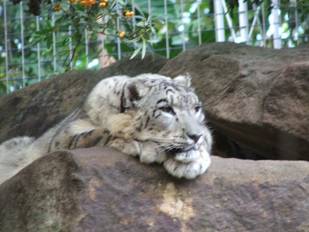 snow leopard by simonsinclair